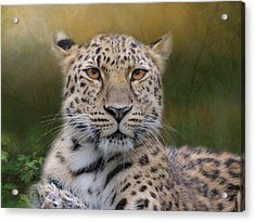 Acrylic Print featuring the photograph Amur Leopard by Patti Deters