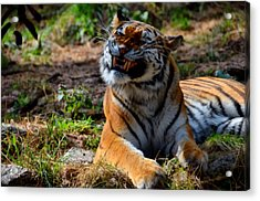 Acrylic Print featuring the mixed media Amur Tiger 6 by Angelina Vick