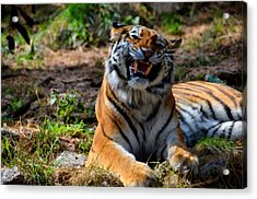 Acrylic Print featuring the mixed media Amur Tiger 7 by Angelina Vick