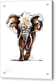 Amy Grown Acrylic Print