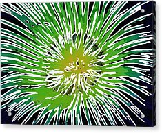 An Abstract Scene Of Sea Anemone 2 Acrylic Print by Lanjee Chee
