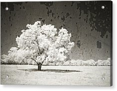 An Altered State Acrylic Print by Mike Irwin
