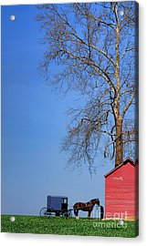 An Amish Scene Acrylic Print by Olivier Le Queinec