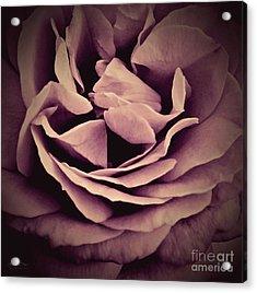 An Angel's Rose Acrylic Print by Robert ONeil