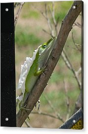 Acrylic Print featuring the photograph An Anole Shedding Its Skin by Jeanne Kay Juhos