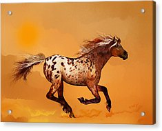 An Appaloosa Called Ginger Acrylic Print
