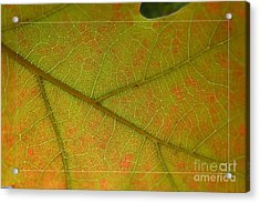 Acrylic Print featuring the photograph An Autumn Leaf by Jean Bernard Roussilhe