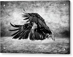 An Eagles Quest Acrylic Print by Wes and Dotty Weber