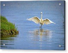 An Egret Spreads Its Wings Acrylic Print by Rick Berk