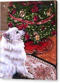 An Eskie Christmas Acrylic Print
