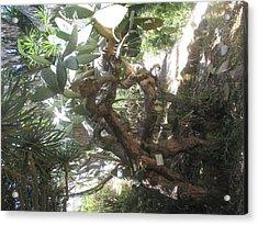 An Exotic Tree Acrylic Print