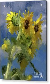 Acrylic Print featuring the photograph An Impression Of Sunflowers In The Sun by Lois Bryan
