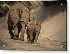 An Indian Rhinoceros And Her Baby Acrylic Print by Michael Nichols