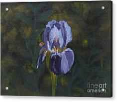 An Iris In My Garden Acrylic Print