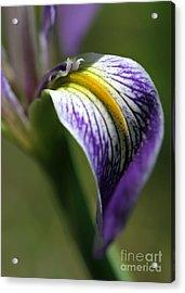 An Iris Petal Acrylic Print by Sabrina L Ryan