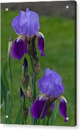 An Iris Picture Acrylic Print