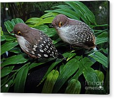 An Old Couple These Two Birds Acrylic Print