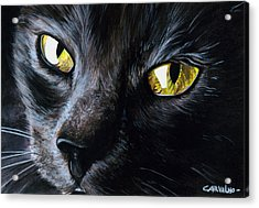 An Old Friend Acrylic Print by Daniel Carvalho