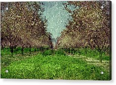 An Orchard In Blossom In The Eila Valley Acrylic Print