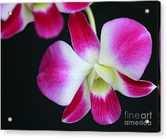 An Orchid Acrylic Print by Sabrina L Ryan