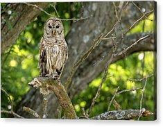 Acrylic Print featuring the photograph An Owl's Gaze by Scott Bean