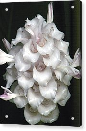 An Unusual Orchid Acrylic Print