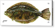 Anatomical Flounder Acrylic Print by Kevin Brant