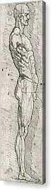 Anatomical Study Acrylic Print by Leonardo Da Vinci