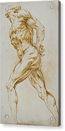 Anatomical Study Acrylic Print by Rubens