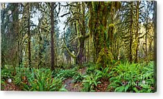 Ancient Forest Panorama Acrylic Print
