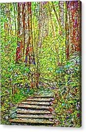 Ancient Forest Path - Tamalpais California Acrylic Print