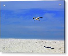 Acrylic Print featuring the photograph Ancient Mariner by Marie Hicks