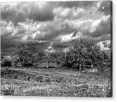 Ancient Orchard Acrylic Print