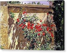 Ancient Roses Acrylic Print by David Lloyd Glover