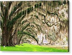 Ancient Southern Oaks Acrylic Print