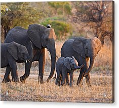 Ancient Tradition Acrylic Print by Basie Van Zyl