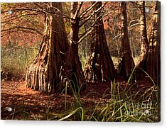 Acrylic Print featuring the photograph Ancient Tree At Lake Murray by Tamyra Ayles