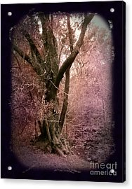 Ancient Tree By A Stream Acrylic Print by Laura Iverson