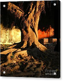 Ancient Tree In A Chinese Courtyard Acrylic Print by Yali Shi