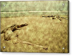 Ancient Tree Roots Acrylic Print by Bonnie Bruno