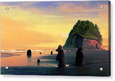 Ancient Trees At Neskowin Beach Acrylic Print