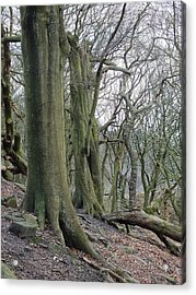 Ancient Trees Acrylic Print