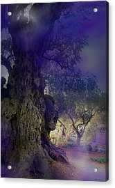 Acrylic Print featuring the photograph Ancient Witness Tree Garden Of Gethsemane Vision by Anastasia Savage Ealy