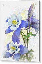 Ancolie Acrylic Print