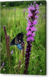 Acrylic Print featuring the photograph And The Bee by Ben Shields