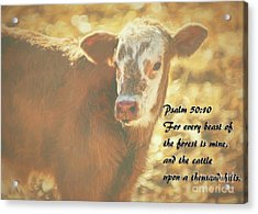 And The Cattle Acrylic Print by Janice Rae Pariza