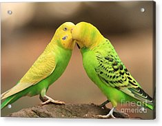 And Then He Kissed Me Acrylic Print by Kim Henderson