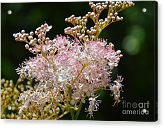 And Then She Decided To Dance With Her Soul Acrylic Print