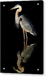 Acrylic Print featuring the photograph And Then There Were Two by Donna Kennedy