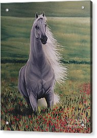 Andalusian Spirit Acrylic Print by Louise Green